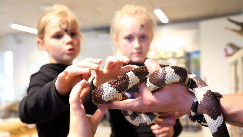 Nærkontakt med slange ved sensommerfesten i Aalborg Zoo