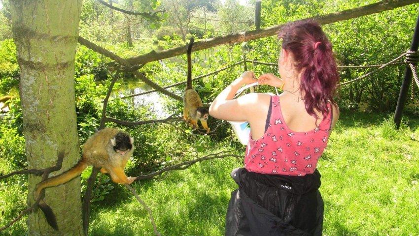 Zenia med drilske aber i Ree Park. Foto: Børnehjælpsdagen.