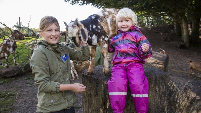 To piger hos gederne