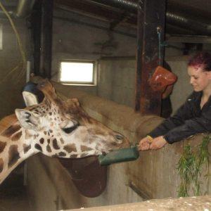 Børnehjælpsdagens projekt Drømmebanken med dyrepasser